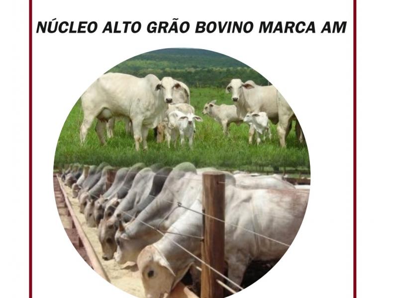 NÚCLEO ALTO GRÃO MARCA AM PARA BOVINOS CORTE E LEITE 25 kg